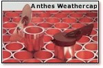 Anthes Weathercaps